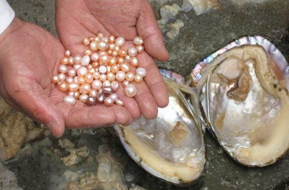 Seven Ways to Tell a Pearl Is a Real Pearl