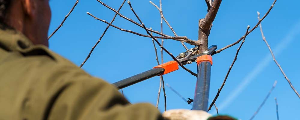 What Are the Importance of Latest Technology for Tree Pruning in Lancaster PA?