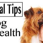 4 Essential Tips for Dog Dental Health in Idaho Falls