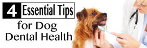 Dog Dental Health